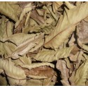 Dried whole leaves of guava